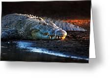 Nile Crocodile On Riverbank-1 Greeting Card
