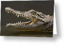 Nile Crocodile Greeting Card