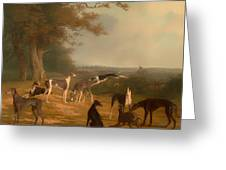 Nine Greyhounds In A Landscape Greeting Card