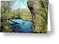 Nisqually Pond Greeting Card