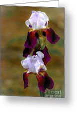 Nita's Iris Greeting Card