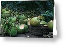 Niu Hawaiian Coconuts Hooululahui Kahekilinui Wailuku Greeting Card
