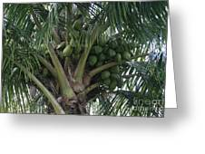 Niu Ola Hiki Coconut Palm Greeting Card