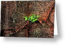 No Barriers To Growth Greeting Card