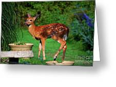 No I'm Not Bambi Greeting Card