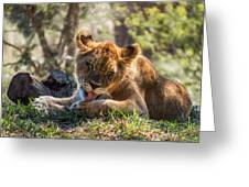 Lion Cub Lick Greeting Card