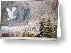 Snowy Owl Flight Greeting Card