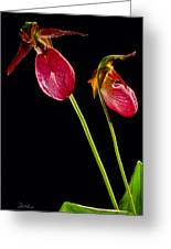 No Lady Slipper Was Harmed Greeting Card