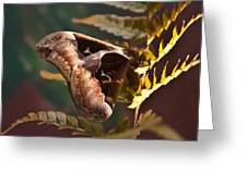 Nocturnal Moth Greeting Card