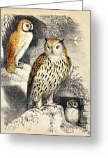 Nocturnal Scene With Three Owls Greeting Card