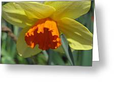 Nodding Daffodil Greeting Card