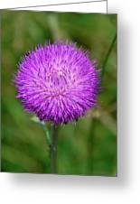 Nodding Thistle Close-up Greeting Card