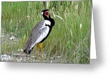 Noisy Bird Greeting Card