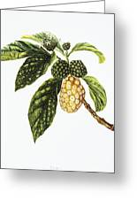 Noni Fruit Art Greeting Card