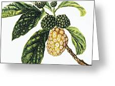 Noni Fruit Greeting Card