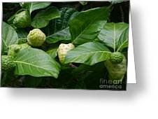 Noni Greeting Card