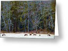 Nooksack Herd Greeting Card