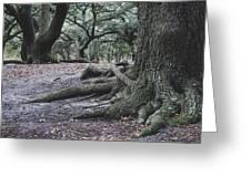 Norfolk Trees Greeting Card