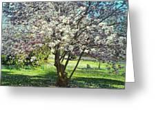 North American Magnolia Tree Greeting Card