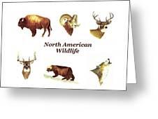 North American Wildlife Greeting Card