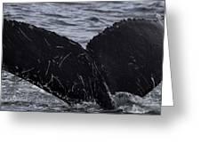 North Atlantic Humpback Greeting Card