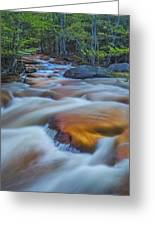 North Branch Rapid In Spring  Greeting Card