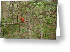 North Carolina Cardnial Greeting Card