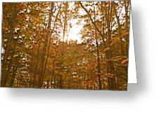 North Carolina Woods Greeting Card