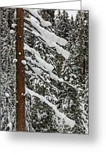 North Cascades Forest Greeting Card