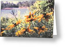 North Channel Beauties Greeting Card