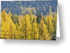 North Idaho Gold Greeting Card