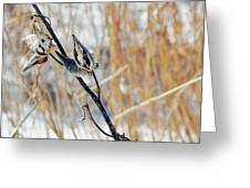 North Pond Prairie Grass Greeting Card