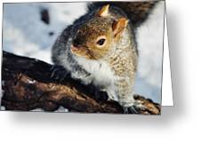 North Pond Squirrel Greeting Card