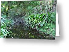 North Shore Forest Glade Greeting Card