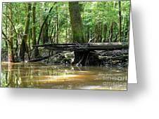 North West Florida Swamp Greeting Card
