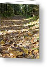North Woods Path Greeting Card
