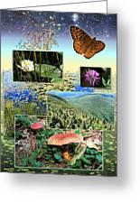 Northern Appalachian Summer Greeting Card