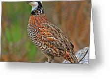 Northern Bobwhite Greeting Card