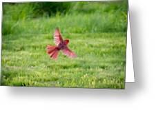 Northern Cardinal In Flight Greeting Card