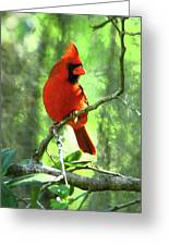 Northern Cardinal Proud Bird Greeting Card