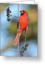 Northern Cardinal With Berry Greeting Card