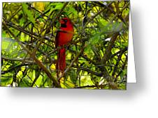 Northern Cardinal Work Number Two Greeting Card