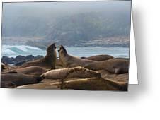 Northern Elephant Seals Mirounga Angustirostris Greeting Card