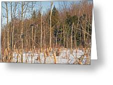 Northern Forests Ghost In-flight Greeting Card