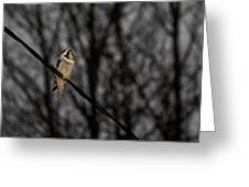 Northern Hawk-owl 22 Greeting Card
