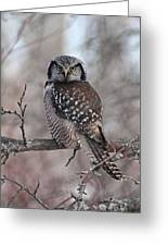Northern Hawk Owl 9470 Greeting Card