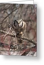 Northern Hawk Owl Having Lunch 9417 Greeting Card