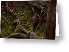 Northern Ohio Chipmunk Greeting Card