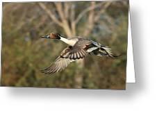 Northern Pintail Tree Greeting Card