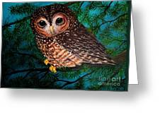 Northern Spotted Owl Greeting Card